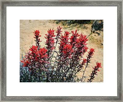 Desert Flower Impressions Two - Paintbrush Framed Print