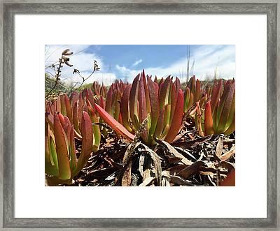 Desert Flowers Framed Print by Contemporary Art