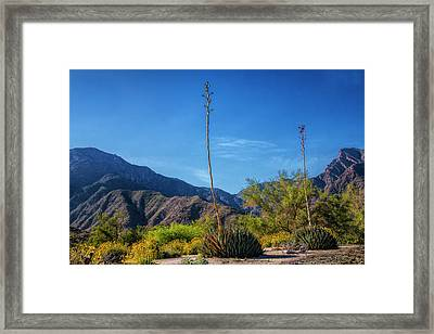 Framed Print featuring the photograph Desert Flowers In The Anza-borrego Desert State Park by Randall Nyhof