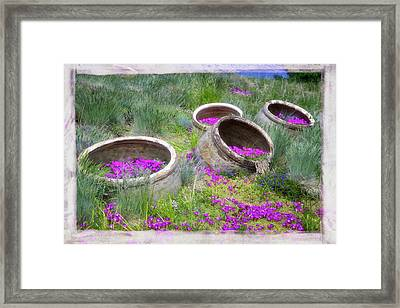 Desert Flowers Framed Print by Joan Carroll
