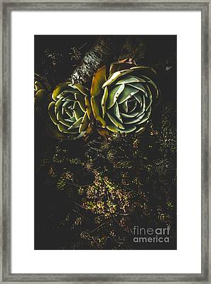 Desert Flowers Framed Print by Jorgo Photography - Wall Art Gallery