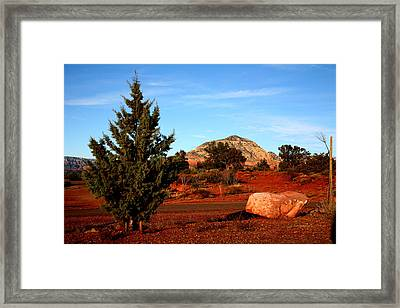 Desert Friends Framed Print by Jennilyn Benedicto