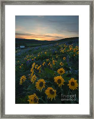 Desert Gold Framed Print by Mike Dawson