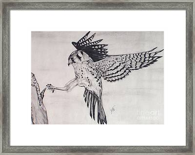 Framed Print featuring the drawing Falcon I by Suzette Kallen