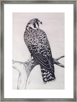 Desert Hawk II Framed Print