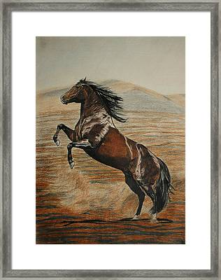 Framed Print featuring the drawing Desert Horse by Melita Safran