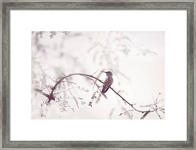 Desert Hummingbird II Framed Print