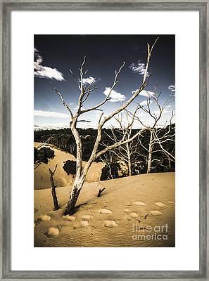 Desert In The Middle Of The Woods Framed Print