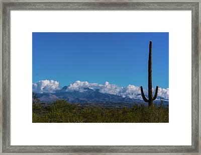Desert Inversion Cactus Framed Print