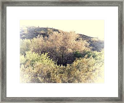 Desert Ironwood Afternoon Framed Print