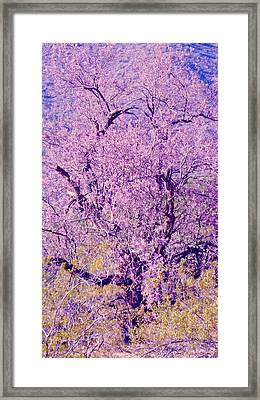 Desert Ironwood  Beauty 2 Framed Print