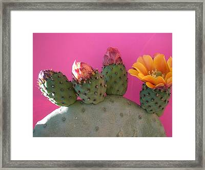 Desert Jewels IIi Framed Print by Aleksandra Buha
