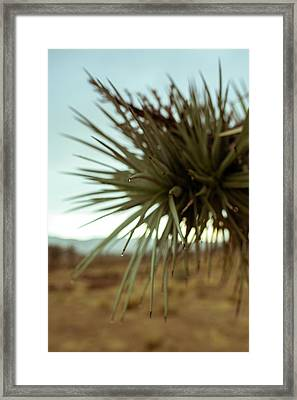 Desert Leaves Framed Print