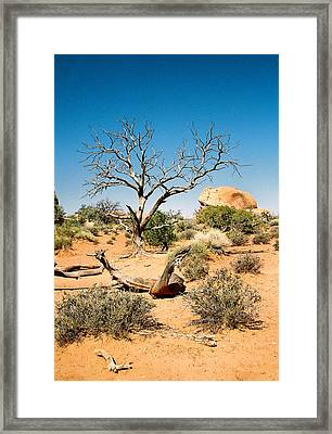 Desert Life Framed Print by Michael  Cryer