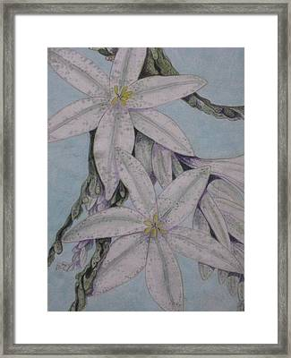 Desert Lillie  Close-up Framed Print by David Kelly