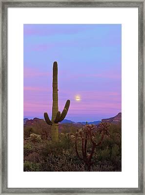 Desert Moon Framed Print