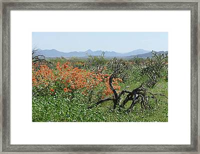 Desert Orange Framed Print by Laurel Powell