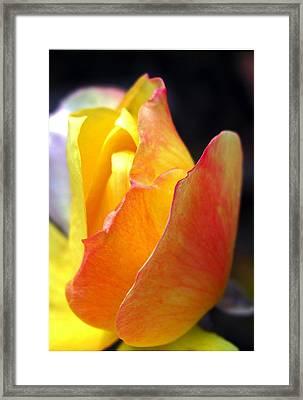 Desert Peace Ralph Framed Print