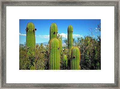 Desert Plants - All In The Family Framed Print