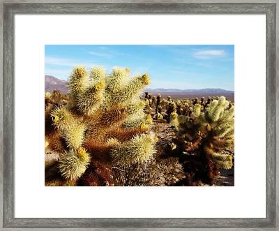 Framed Print featuring the photograph Desert Plants - Porcupine Cholla by Glenn McCarthy