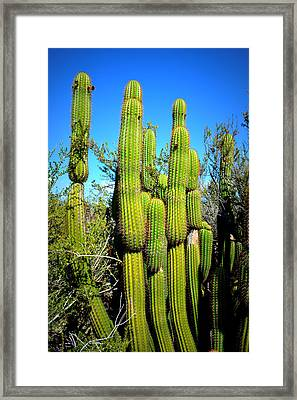 Framed Print featuring the photograph Desert Plants - Standing Tall by Glenn McCarthy