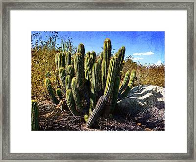 Framed Print featuring the photograph Desert Plants - The Wild Bunch by Glenn McCarthy
