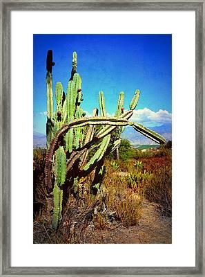 Framed Print featuring the photograph Desert Plants - Westward Ho by Glenn McCarthy