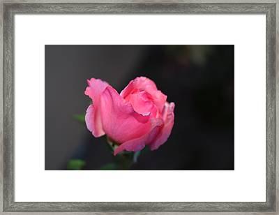 Desert Rose 1 Framed Print
