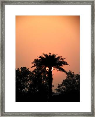 Desert Rose Framed Print by Aim to Aimless