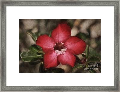 Desert Rose In Daytona Framed Print
