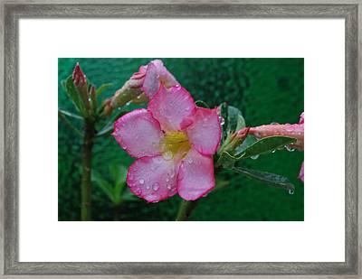 Desert Rose On Green Framed Print by John Roncinske