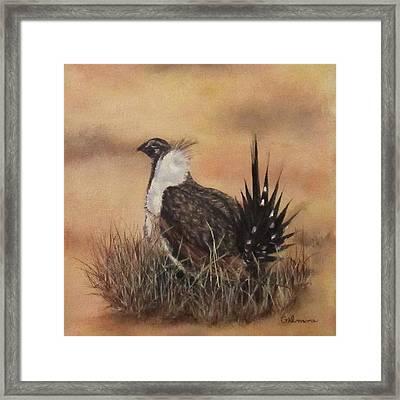 Desert Sage Grouse Framed Print by Roseann Gilmore
