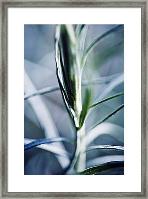 Desert Sage Framed Print