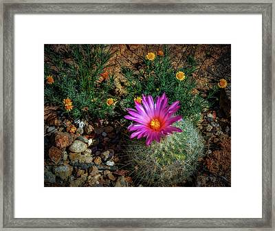 Desert Splash Framed Print by Elaine Malott