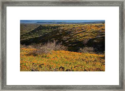 Framed Print featuring the photograph Desert Spring Flowers by Dave Dilli