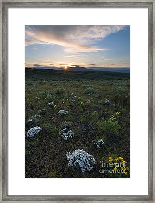Desert Sunburst Framed Print by Mike Dawson