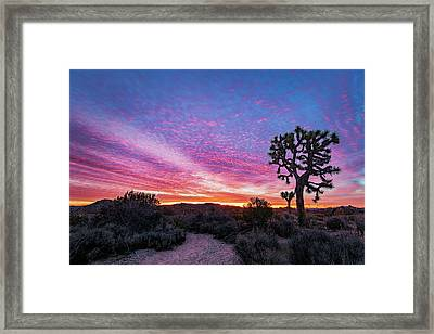 Desert Sunrise At Joshua Tree Framed Print
