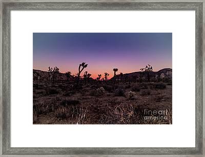 Desert Sunrise Joshua Tree National Park Framed Print by Timothy Kleszczewski