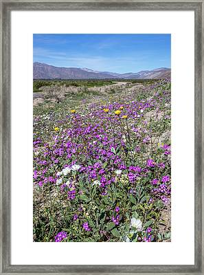 Desert Super Bloom Framed Print by Peter Tellone