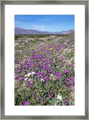 Desert Super Bloom Framed Print