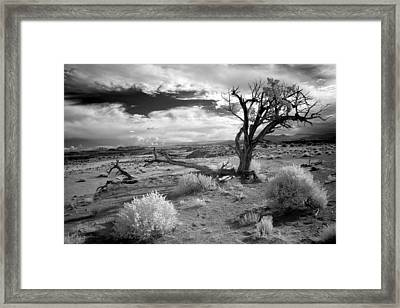 Desert Tree Framed Print by G Wigler