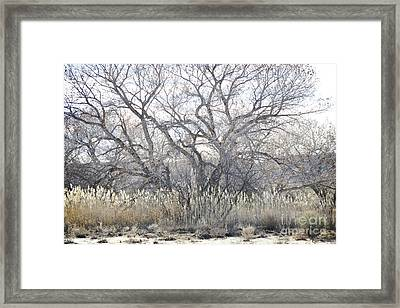 Framed Print featuring the photograph Desert Tree Willows by Andrea Hazel Ihlefeld