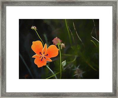 Desert Wildflower 2 Framed Print by Penny Lisowski