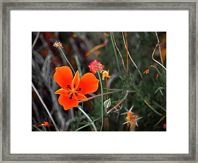 Desert Wildflowers Framed Print by Penny Lisowski