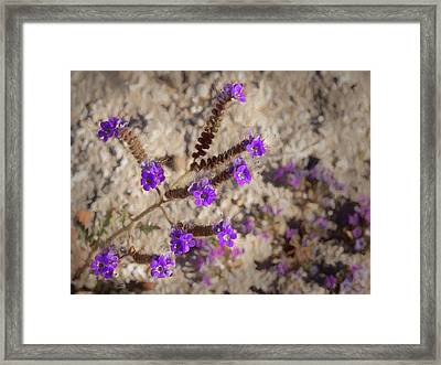 Desert Zig Zag Purple Flower Framed Print by Penny Lisowski