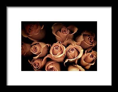 Shabby Chic Roses Framed Prints