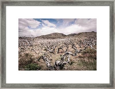 Desolation Framed Print by Andrew Matwijec
