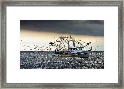 Desperado  Framed Print by Christy Ricafrente