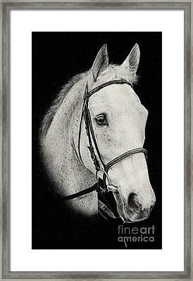Dessie Framed Print by Stuart Attwell