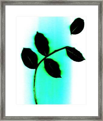 Detach Framed Print by Slade Roberts